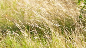 Grass on the wind stock video footage
