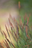 Grass in the wind Stock Photos