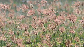 Grass in the wind. HD stock video footage