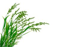 Grass in wind. Illustration  of high green grass in wind on white background Royalty Free Stock Image