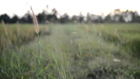 The grass and the wind. stock footage