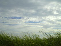 Grass wind and sky Royalty Free Stock Photo