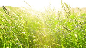 Grass on wind with sunset stock footage