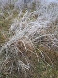 Grass in winter royalty free stock photography