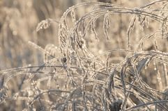 Grass with winter rime and frost crystals in sunlight stock photo