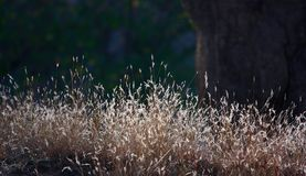Grass in winter sun Royalty Free Stock Images
