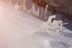 Grass in winter sunset Royalty Free Stock Images