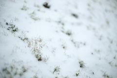 Grass at winter time Royalty Free Stock Photography