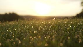 Free Grass With Dew Drops. Blurred Grass Background With Water Drops Closeup. Nature. Green Spring Environment Concept. Slow Motion. Su Stock Image - 141750421