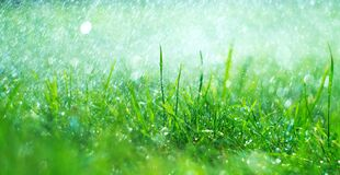 Free Grass With Rain Drops. Watering Lawn. Rain. Blurred Grass Background With Water Drops Closeup. Landscaping Stock Image - 182349011