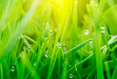 Grass With Water Drops Stock Images