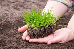 Grass in woman hands, nature conservation Royalty Free Stock Photo