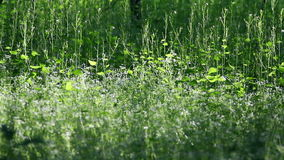 Grass on a wood meadow stock video footage