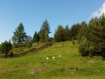 Grass. Wood, grass, sheep, sky, garden , clouds royalty free stock photo