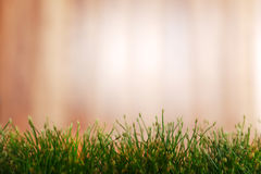 Grass and garden background Royalty Free Stock Image