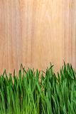 Grass on Wooden Background Royalty Free Stock Photography