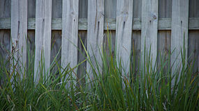 Grass and a wooden fence wallpaper. This shot was taken in a park where I went to have a stroll around. I saw this tall grass and a fence along the park walkway Stock Images