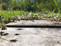 Grass and wooden planks in swamp Stock Photo