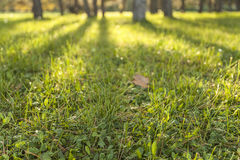 Grass in woods Stock Image