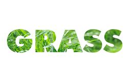 Grass word concept Stock Photo