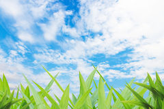 Grass yard and cloud blue sky background Royalty Free Stock Images