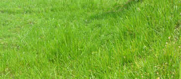 Grass yard Royalty Free Stock Photography