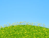 Grass and yellow flowers. On a background of blue sky Stock Image