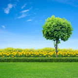 Grass and yellow flowers. Green grass and yellow flowers in garden with tree Royalty Free Stock Image