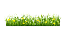 Grass with yellow flowers. Vector illustration of green grass with yellow flowers on a white background Stock Photos