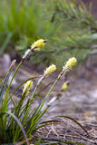 Grass with inflorescences largely Stock Photo
