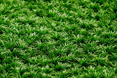 Grass as background Stock Photos