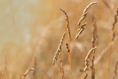 grass zmierzch dzikiego zdjęcie stock