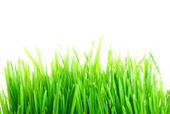 Grass1 Stock Photography
