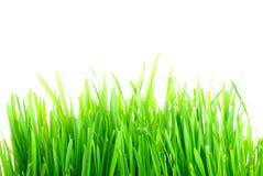 Grass1 Fotografía de archivo