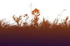 Grasschattenbild auf einem weißen Hintergrund Stockbilder