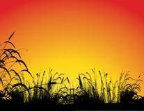 Grasschattenbildhintergrund lizenzfreie abbildung