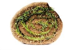 Grasscholle Lizenzfreies Stockbild