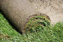 Grasscholle stockbilder