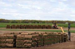 Grasscholle-Bauernhof Stockbilder