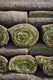 Grasscholle-Gras-Hintergrund stockfotografie