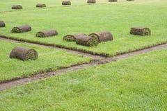 Grasscholle rollt auf einem Grasfeld lizenzfreies stockbild