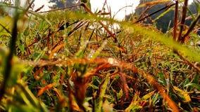 grassen royalty-vrije stock foto's