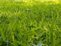 grassen royalty-vrije stock afbeelding