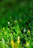 Grassen Stock Fotografie