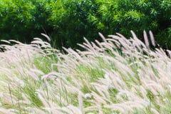 grassen Stock Foto