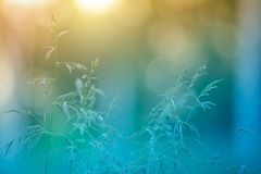 Grassen in de de zomerweide royalty-vrije stock fotografie