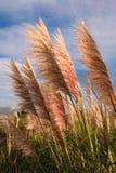 Grassen die in de wind blazen Stock Afbeeldingen