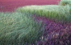 Grassen die op een stuk van moerasland groeien Stock Foto
