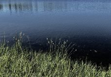 Grassen en rustig water met diepe schaduwen royalty-vrije stock fotografie