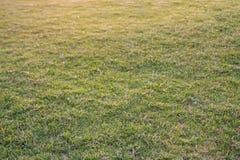 Grassengebied Stock Afbeelding